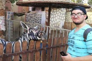 ロバに色を塗ってシマウマに変えた?エジプトの動物園に対する疑惑が浮上
