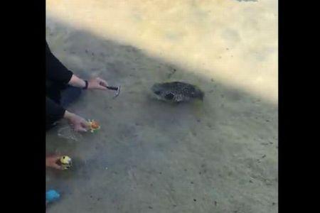 色や形を見分けて移動できる!ハワイでトレーニングされた魚の動画がすごい