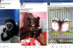 タイでフェイスブックを通して多くの動物を販売、監視団体が警鐘を鳴らす