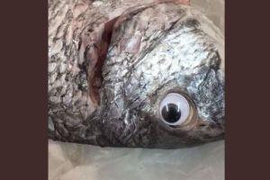 新鮮に見せるため、魚にニセの目をはめた魚屋の策略がバレて話題に