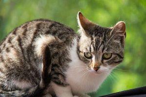 自然動物を保護するため、NZの小さな街が新たに猫を飼うのを禁止する案を検討