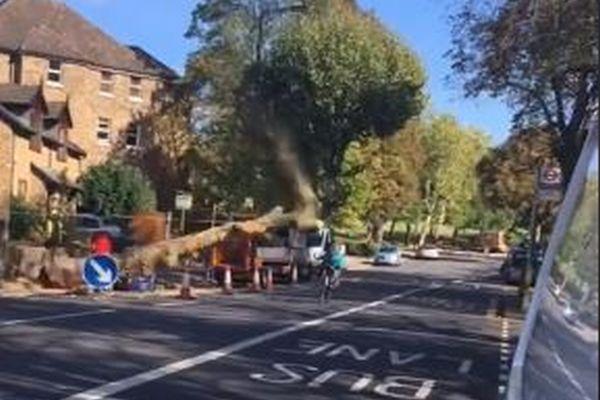 自転車の男性に向かって突然、大きな木が倒れてきた!その瞬間の動画が恐ろしい