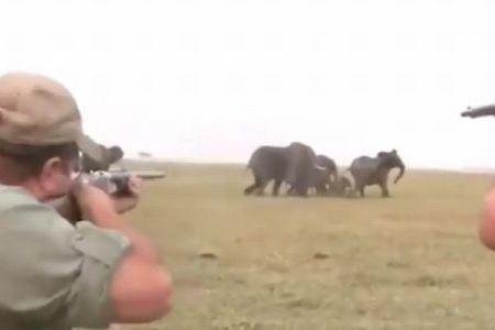 群れで歩いていたゾウを射殺するハンター、ショッキングな動画に非難が殺到