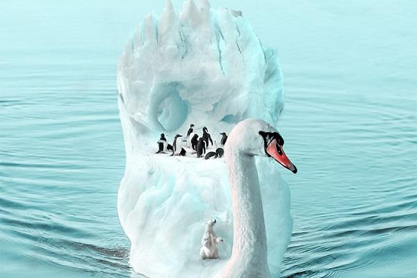写真加工ソフトにより想像上の動物の世界を表現した作品の数々がすごいと話題に