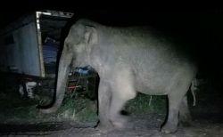 ニューヨーク州で真夜中にゾウが通りを歩いていた…現場に駆けつけた警察官もびっくり