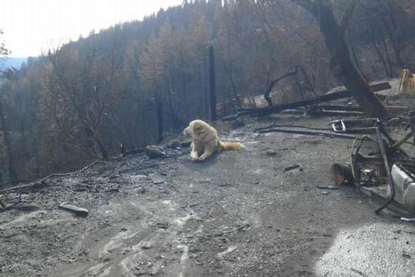 米の山火事で焼けた家を守り、待ち続けたワンコ、ついに飼い主と再会を果たす