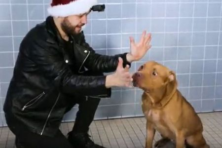 シェルターのワンコらを引き取ってもらうため…犬にマジックを披露する動画が話題に