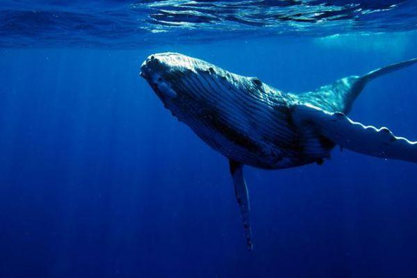 なぜ欧米の人々は捕鯨に反対するのか?海外のSNSに寄せられた意見とは