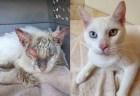 死の瀬戸際にあった野良猫、回復し目を開いた姿が美しいとして話題に