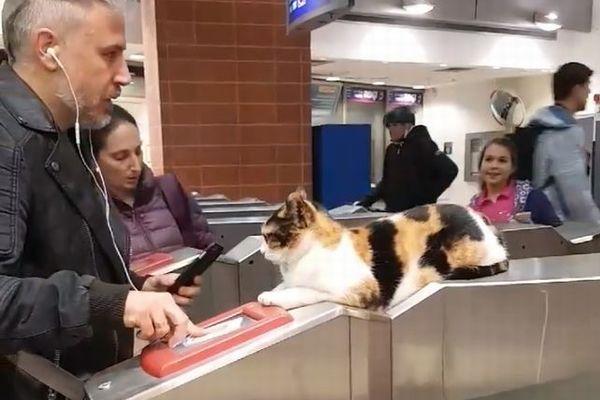 イスラエルの駅でいつも自動改札機に座り、乗客を見送るニャンコが話題に