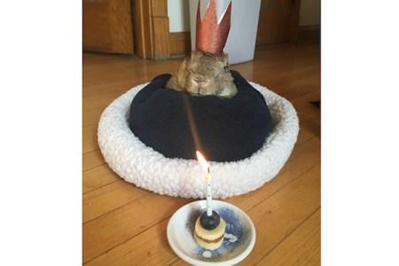 世界最高齢のウサギ(16才)はあんまり可愛くなかった