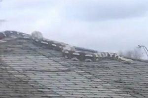 米住宅街の屋根に突然巨大なヘビが出現、付近の住民もびっくり!