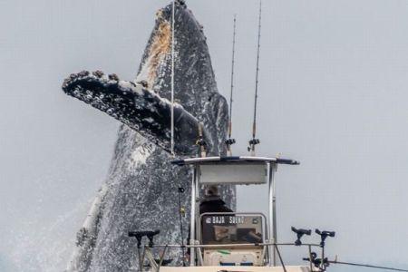漁船の前で突然、ザトウクジラが大ジャンプ、その瞬間を捉えた写真がダイナミック