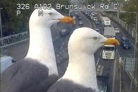 交通監視カメラの視界をふさぐクールなカモメが人気者に
