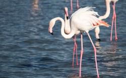 子供が水切りした石がフラミンゴの足を折り、不運な鳥が死ぬ運命に