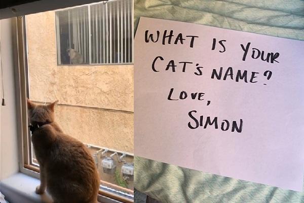 """ビルの窓越しに""""恋に落ちた""""2匹の猫…実際に会ってみたら意外な展開に!"""