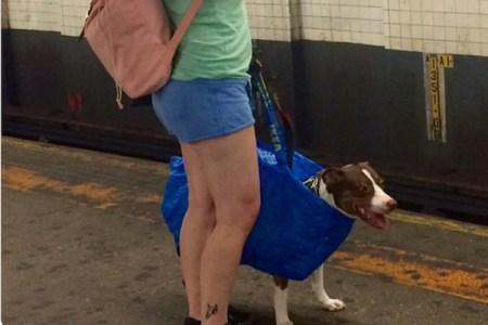 「犬はバッグに入れて」の規則をチートする、ニューヨーカーのライフハックがお見事