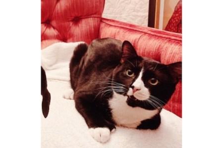 ミネソタ州の猫が、全自動洗濯機のお急ぎコースを生きのびた!