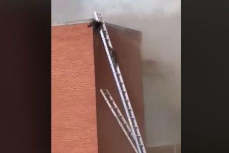火災で屋根に取り残されたアライグマたち、消防士がかけた梯子で無事避難