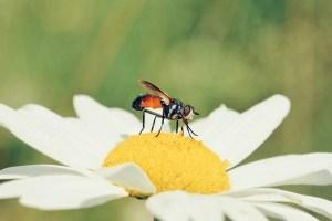 慢性的な痛みを発症?!怪我をした虫に関する可哀そうな研究結果が明らかに