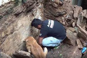 インドで崩壊した建物の下から奇跡的に子犬を救助、諦めない母犬の姿が感動的