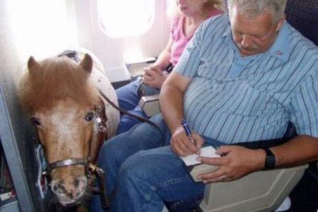 ミニチュア・ホースがサービス・アニマルとして飛行機への搭乗を許可される
