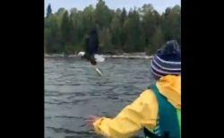 少年が投げた魚を、野生のハクトウワシが空中で見事にキャッチ【動画】