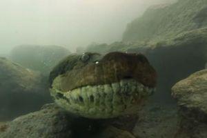 ブラジルで水中に潜む巨大アナコンダと遭遇、一部始終をカメラがとらえた