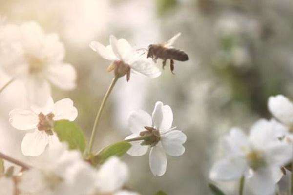 スウェーデンのマクドナルドが看板の裏に「ミツバチのホテル」を設置する