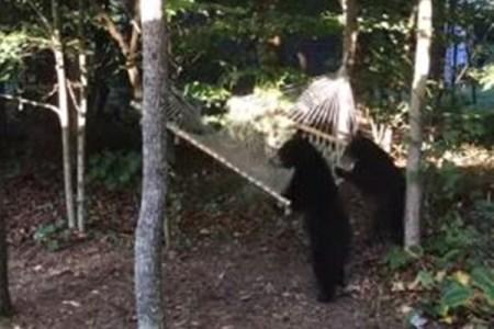 「この場所は僕のもんだ!」クマの子供たちがハンモックで遊ぶ様子がかわいい