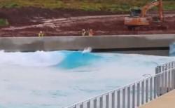 波乗りスワン、イギリスの施設でサーフィンする白鳥が撮影される