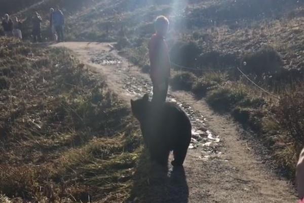 ハイキングの途中でクマが出現、接近遭遇した家族が凍りつく【動画】