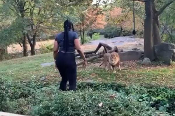 動物園のライオンの敷地内に女が侵入、両手を振る映像がショッキング