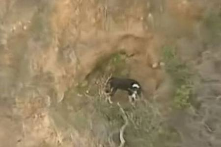 崖の真ん中に取り残されたワンコを発見、レスキュー作戦を実施