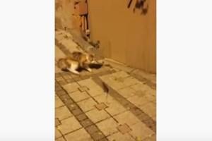 子猫に優しく接するワンコ、ソフトタッチで頭を撫でる動画がかわいい