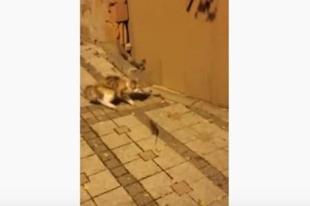 ネコもびっくり!ネズミの予想外の反撃に思わず逃げる動画がユニーク