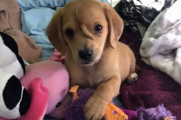 額から第2の尻尾が生えた珍しい子犬が、アメリカで保護される