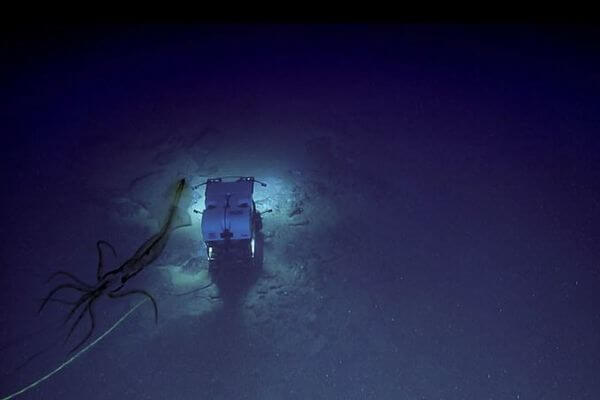 巨大なイカが潜水艇を追跡?深海で撮影された不気味な画像をNOAAが公開