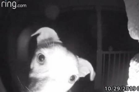 うっかり家から締め出されたワンコ、午前2時に呼び鈴を押し飼い主を起こす