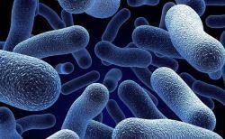 植物のように二酸化炭素を食べるバクテリア、イスラエルの科学者が作ることに成功