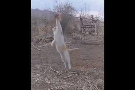 飛んでいる鳥を片手でキャッチ、驚異の身体能力を見せるネコの動画がすごい