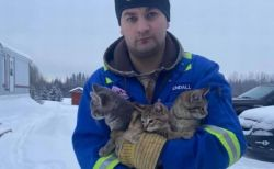 尻尾が凍りつき動けなかった子猫、男性に救助され新しい飼い主のもとへ