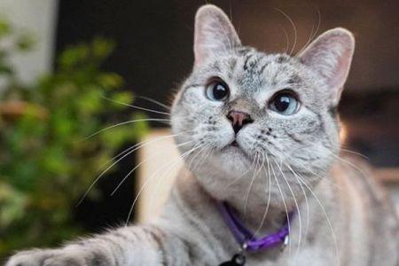 インスタのフォロワーが430万人、シェルター出身のネコがギネス世界記録を達成