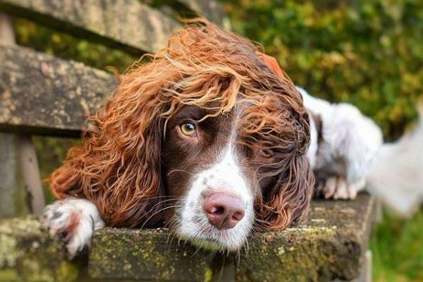 まるでロックスター!ウェーブした見事な毛を持つワンコがインスタで人気
