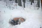 雪の吹きだまりで6匹の子を産み3週間耐えた犬、救出される