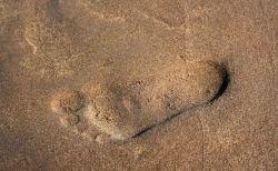 西アフリカに住む現代人のDNA解析により、「未知の初期人類」の存在が浮上
