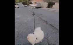 コロナ封鎖の街、ドローンを使って犬を散歩させる動画が話題に