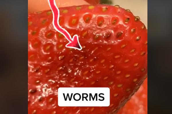 イチゴに虫がいることを、TikTokの複数ユーザーが発見!食べる前によく洗おう