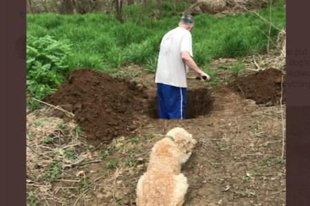 飼い主が掘った自分の墓穴を見つめる犬が切ない