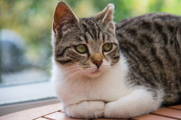 英で初めてネコが新型コロナに感染、危険性や予防する方法とは?